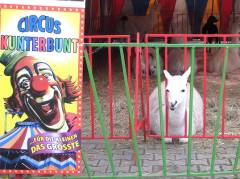 Zirkus im Kiez - Tiere streicheln und Ponyreiten inklusive